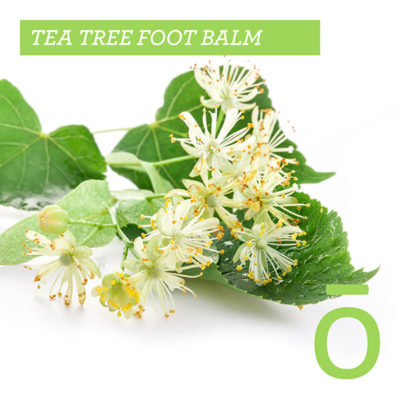 tea tree foot balm